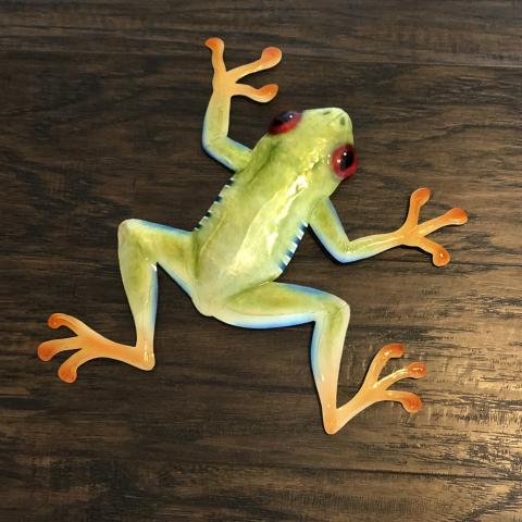 Eangee Red Eyed Tree Frog