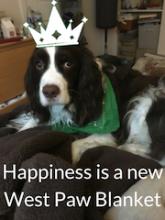 West Paw Washable Dog Blanket
